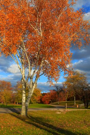 Colorful autumn tree in the park Archivio Fotografico
