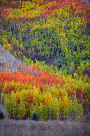 Colorful autumn trees on mountain top