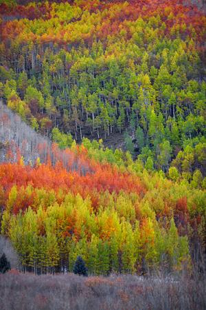 Colorful autumn trees on mountain top Stock fotó - 112091391