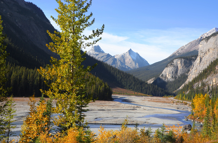 Scenic landscape in Jasper national park near Icefields park way
