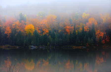 Autumn tree reflections in the lake with morning mist