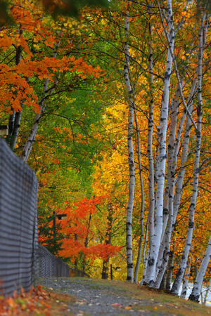 Colorful Autumn trees by the trail Imagens