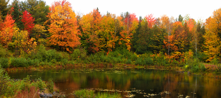 Panoramic view of autumn trees by the pond Stock Photo