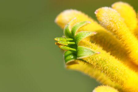 Extreme close up shot flower Pollen and Stamen Imagens