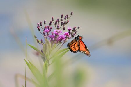 Colorful butterfly on a plant Zdjęcie Seryjne