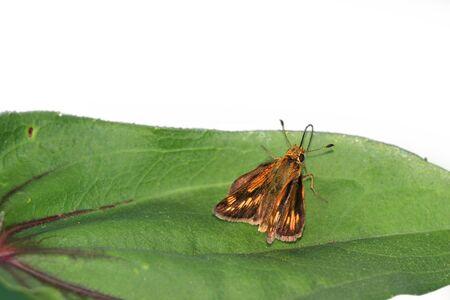 Close up shot of moth on the leaf