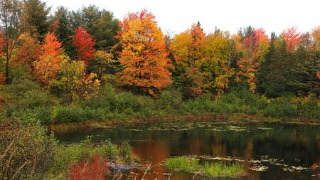 Panoramic view of autumn trees by the pond 写真素材