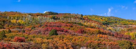 Panoramic view of canopy of colorful bushes on the hill to at Continental divide in Colorado