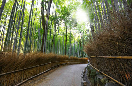 Famous Bamboo forest in Kyoto city, Japan