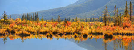 Panoramic view autumn bushes and trees at Vermilion lakes in Alberta, Canada Фото со стока