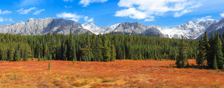 Panoramic view of spruce trees in the meadow in rural Alberta, Canada