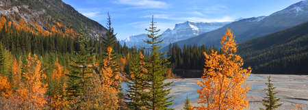 Panoramic view of colorful autumn and pine trees by bow river in rural Alberta,Canada
