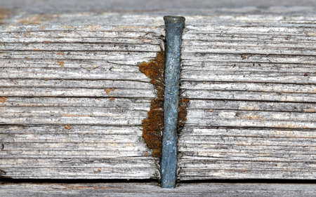 Close up shot of nail in weathered wood