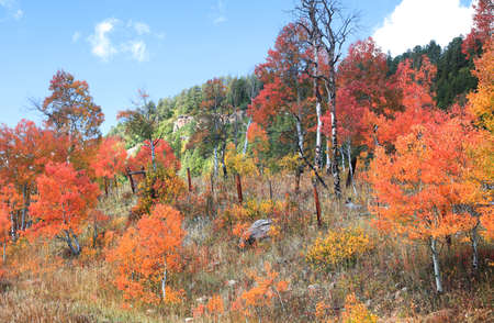 Colorful trees bushes during autumn time in rural Colorado 版權商用圖片 - 155399386