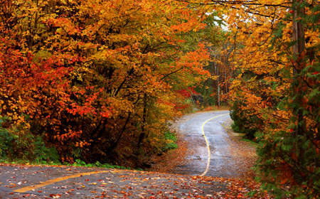 Bright fall foliage along scenic biking trail