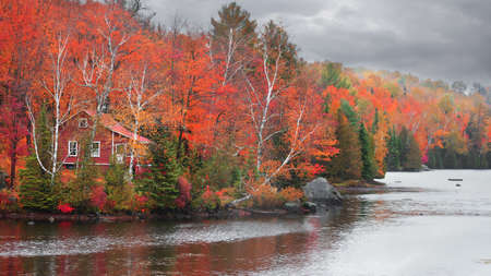 Colorful autumn trees by the lake shore in rural Quebec