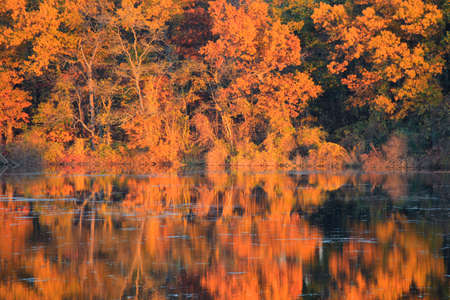 Colorful autumn trees and reflections in lake under sunset