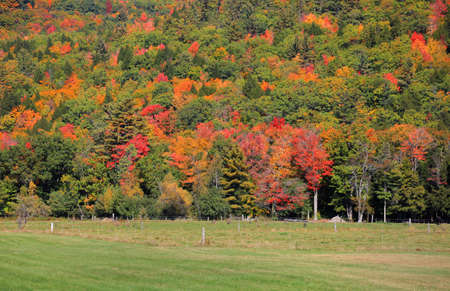 Colorful trees in early autumn time at rural Vermont