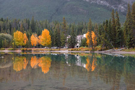 Fall foliage by Bow river near Banff city in Alberta, Canada