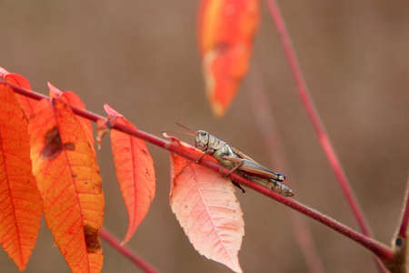 Close up shot of Grasshopper on a plant branch