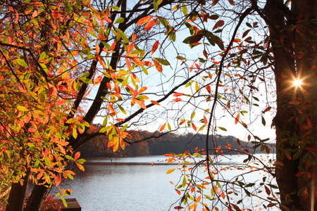 Colorful autumn trees by the lake with sun flare