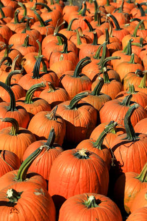 Close up shot of several pumpkins at market place