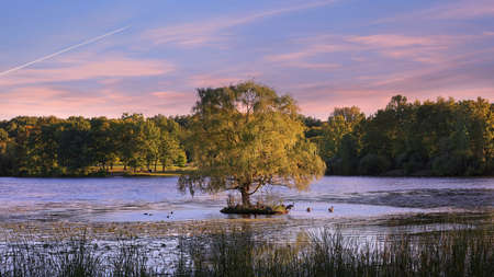 Single Willow tree in the middle of lake under evening sky with different birds resting under tree