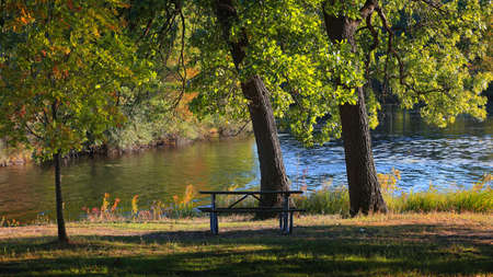 Two large trees by the lake with picnic table in the park