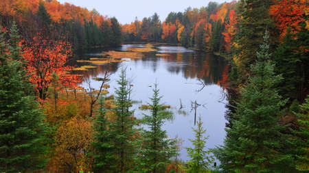 Several pine trees in front of scenic lake in autumn time