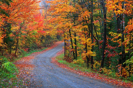 Colorful Maple trees along scenic forest trail