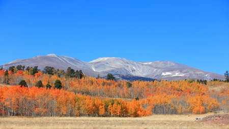 Colorful autumn trees at foot hill in rural Colorado 版權商用圖片