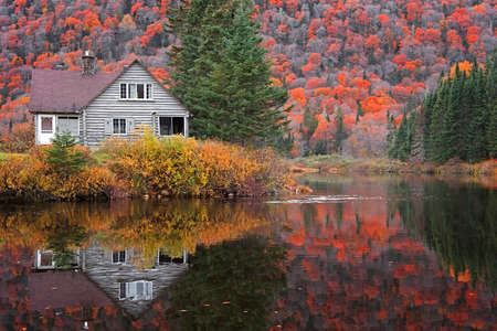 Abandoned cabin in Parc de la national Jacques Cartier surrounded with fall foliage 版權商用圖片