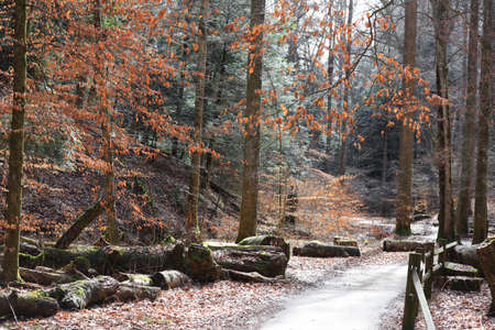 Forest trail in late autumn time in Hocking hills Ohio. 版權商用圖片