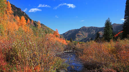 Colorful bushes by running water stream in Colorado rocky mountains 版權商用圖片