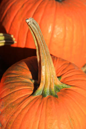 Close up shot of pumpkin stem