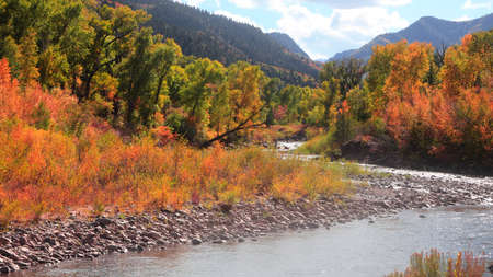 Colorful autumn bushes along Crystal river in Colorado country side