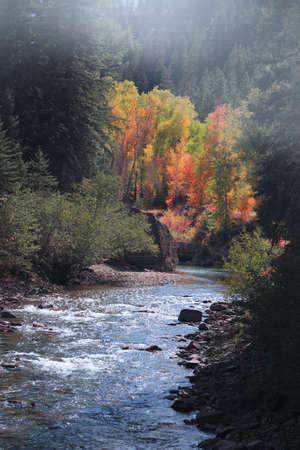 Colorful Autumn trees and bushes along Crystal river in Colorado