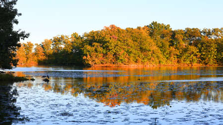 Colorful autumn trees under evening sun light and reflections seen in Kent lake, Michigan 版權商用圖片