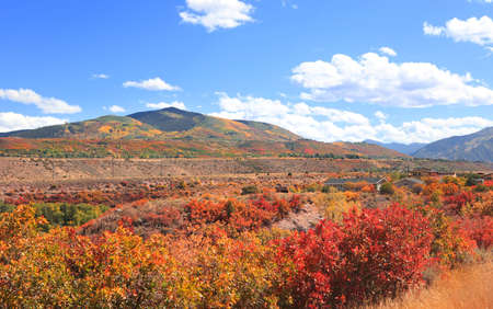 Colorful bushes during autumn time near Aspen, Colorado 版權商用圖片