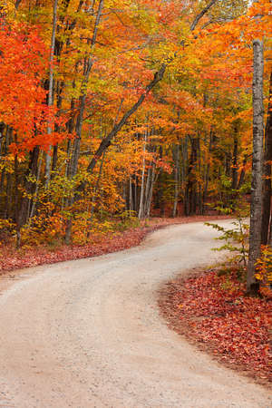 Colorful autumn trees by the winding rural road in Michigan upper peninsula countryside 版權商用圖片