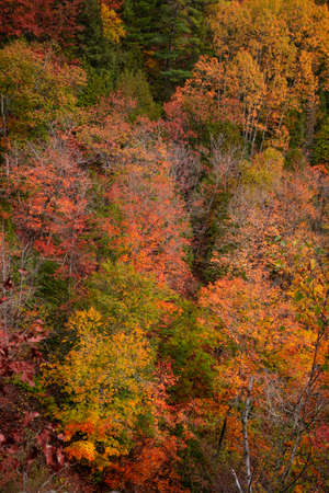 Colorful maple trees in the valley in autumn time 版權商用圖片