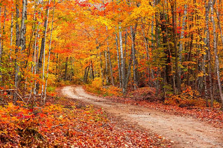 Colorful autumn trees by the forest trail in Michigan upper peninsula countryside