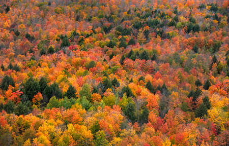 Aerial view of autumn trees on Black river national forest in Michigan upper peninsula