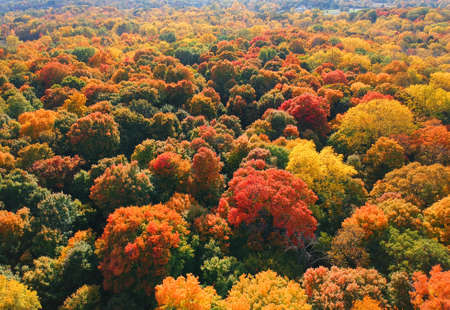 Aerial view of colorful autumn trees in rural Michigan Standard-Bild