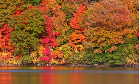 Bright colorful autumn trees and its reflections in lake