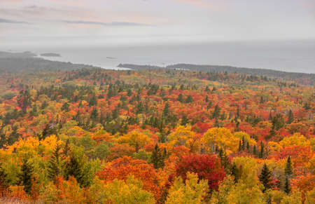 Carpet of colorful trees in autumn tile along lake Superior in Michigan upper peninsula Standard-Bild