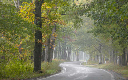 Tunnel of trees along scenic byway 119 near Harbor springs, Michigan on a misty autumn day.