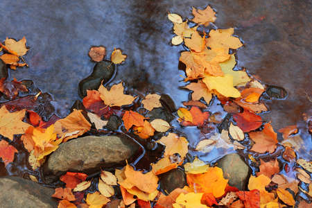Colorful autumn leaves in the running water Standard-Bild