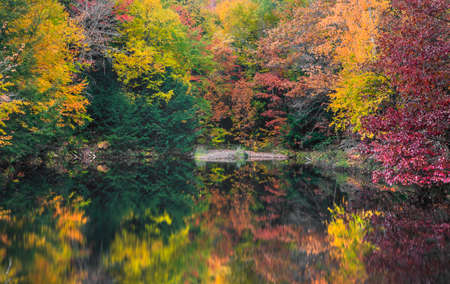 Colorful autumn trees by small lake with its reflections in the lake during autumn time. Standard-Bild