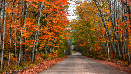 Colorful autumn trees by the forest road in Michigan upper peninsula countryside